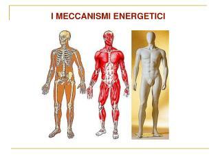 I MECCANISMI ENERGETICI