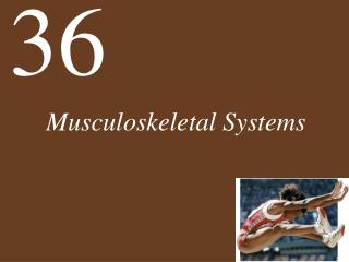 Musculoskeletal Systems