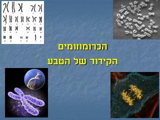 הכרומוזומים  הקידוד  של הטבע