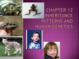 Chapter 12 Inheritance Patterns and Human Genetics