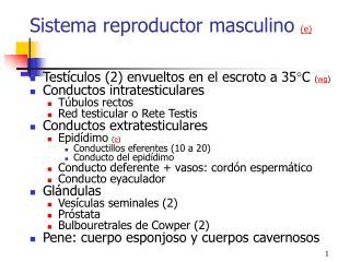 Sistema reproductor masculino  ( e )