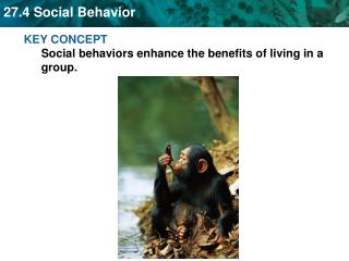 KEY CONCEPT  Social behaviors enhance the benefits of living in a group.