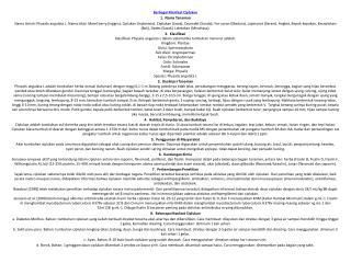 Berbagai Manfaat Ciplukan 1. Nama Tanaman