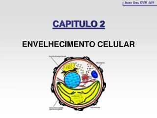 CAPITULO 2 ENVELHECIMENTO CELULAR