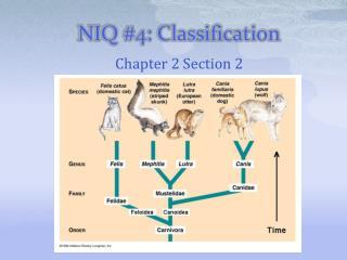 NIQ #4: Classification
