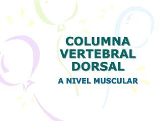 COLUMNA VERTEBRAL DORSAL