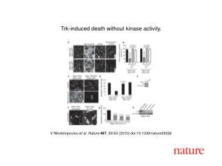 V Nikoletopoulou  et al. Nature 467 , 59-63 (2010) doi:10.1038/nature09336