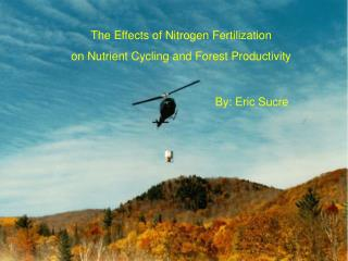 The Effects of Nitrogen Fertilization  on Nutrient Cycling and Forest Productivity