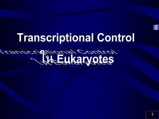 Transcriptional Control  ใน  Eukaryotes