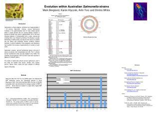 Evolution within Australian  Salmonella  strains