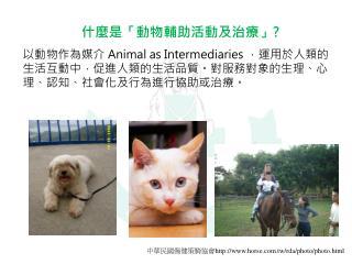 什麼是 「動物輔助活動及治療 」?