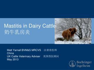 Mastitis in Dairy Cattle 奶牛乳房炎