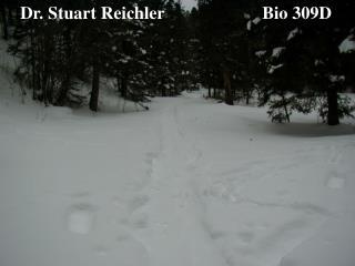 Dr. Stuart Reichler                      Bio 309D