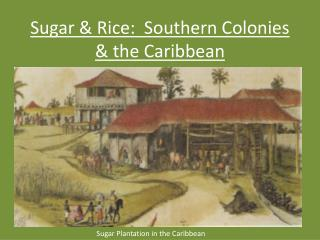 Sugar & Rice:  Southern Colonies & the Caribbean