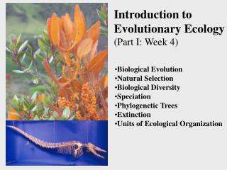 Introduction to  Evolutionary Ecology (Part I: Week 4)