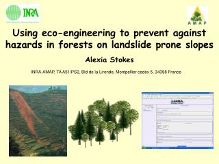 Using eco-engineering to prevent against hazards in forests on landslide prone slopes