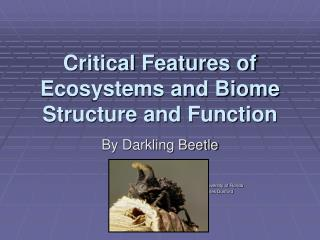 Critical Features of Ecosystems and Biome Structure and Function
