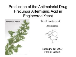 Production of the Antimalarial Drug Precursor Artemisinic Acid in Engineered Yeast
