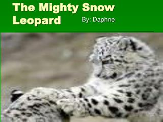 The Mighty Snow Leopard