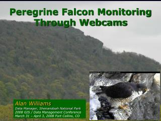 Peregrine Falcon Monitoring  Through Webcams