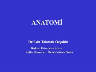 ANATOMİ Dr.Esin Tokmak Özşahin Başkent Üniversitesi Adana