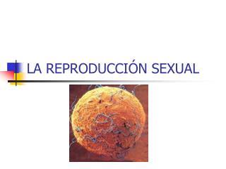 LA REPRODUCCI N SEXUAL