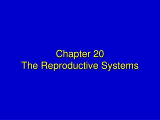 Chapter 20 The Reproductive Systems