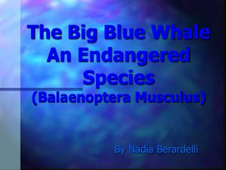 The Big Blue Whale An Endangered Species (Balaenoptera Musculus)