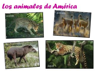 Los animales de Am�rica