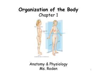 Organization of the Body Chapter 1 Anatomy & Physiology Ms. Roden