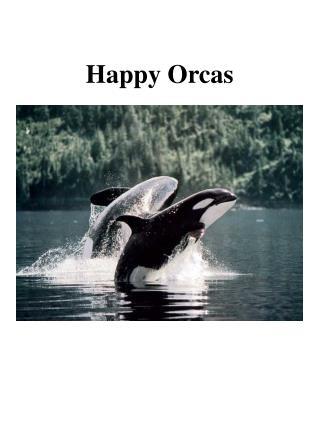Happy Orcas
