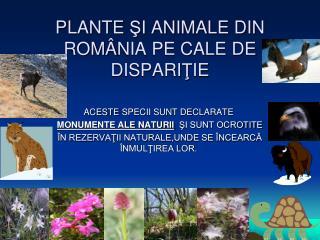 PLANTE  Ş I ANIMALE DIN ROM Â NIA PE CAL E DE  DISPARI Ţ IE