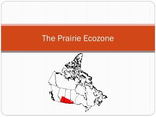 The Prairie  Ecozone