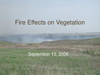Fire Effects on Vegetation