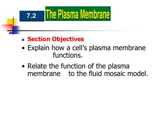 Section Objectives Explain how a cell's plasma membrane 		functions.