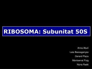 RIBOSOMA: Subunitat 50S