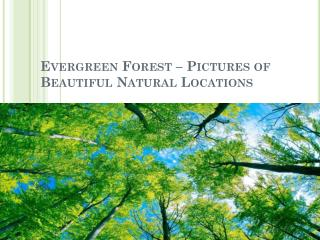 Evergreen forest – pictures of beautiful natural locations