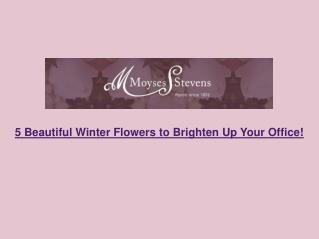 5 Beautiful Winter Flowers to Brighten Up Your Office