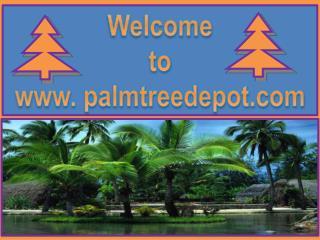 Palm Trees in South Carolina & North Carolina