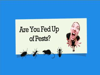 Pest Control Services UK