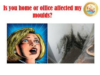 Moulds Are Extremely Harmful