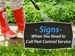 Pest Control Specialist in West Palm Beach � When to Call?