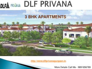 DLF Developer || 9891856789 in Gurgaon: DLF Privana