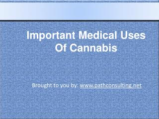 Important Medical Uses Of Cannabis