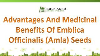 Advantages And Health Benefits Of Emblica Officinalis (Amla)