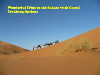 Wonderful Trips to the Sahara with Camel Trekking Options