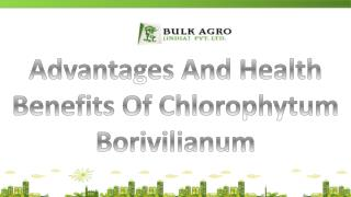Advantages And Health Benefits Of Chlorophytum Borivilianum