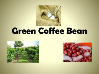 Green Coffee Bean Overview