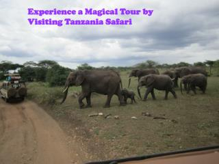 Experience a Magical Tour by Visiting Tanzania Safari