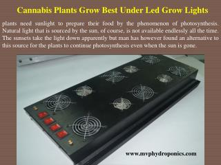 Cannabis Plants Grow Best Under Led Grow Lights